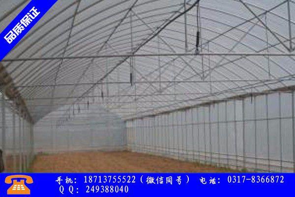 臨沂羅莊區大棚蔬菜怎么培育品牌