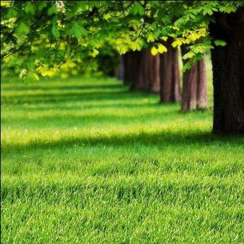 乐清市草子种子安装需注意的几点