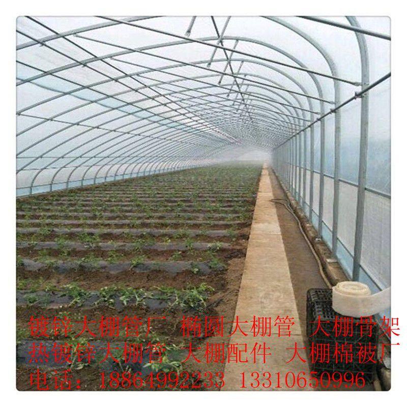 南阳邓州镀锌钢管大棚的建造行业发展新趋势